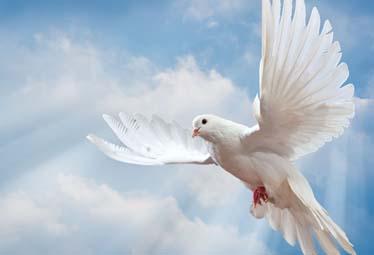 The-life-giving-spirit